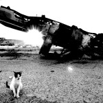 Chat et voiture-2