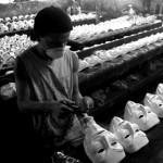 ddt21-Fabrication du masque de Guy Fawkes au Brésil