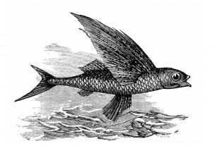 poisson volant.02